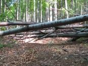 Akadálypálya az erdőben, húsz méterenként