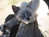 Egy a tucatnyi éhenkórász macskacicóból