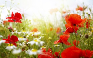 spring-flowers-wallpaper.jpg