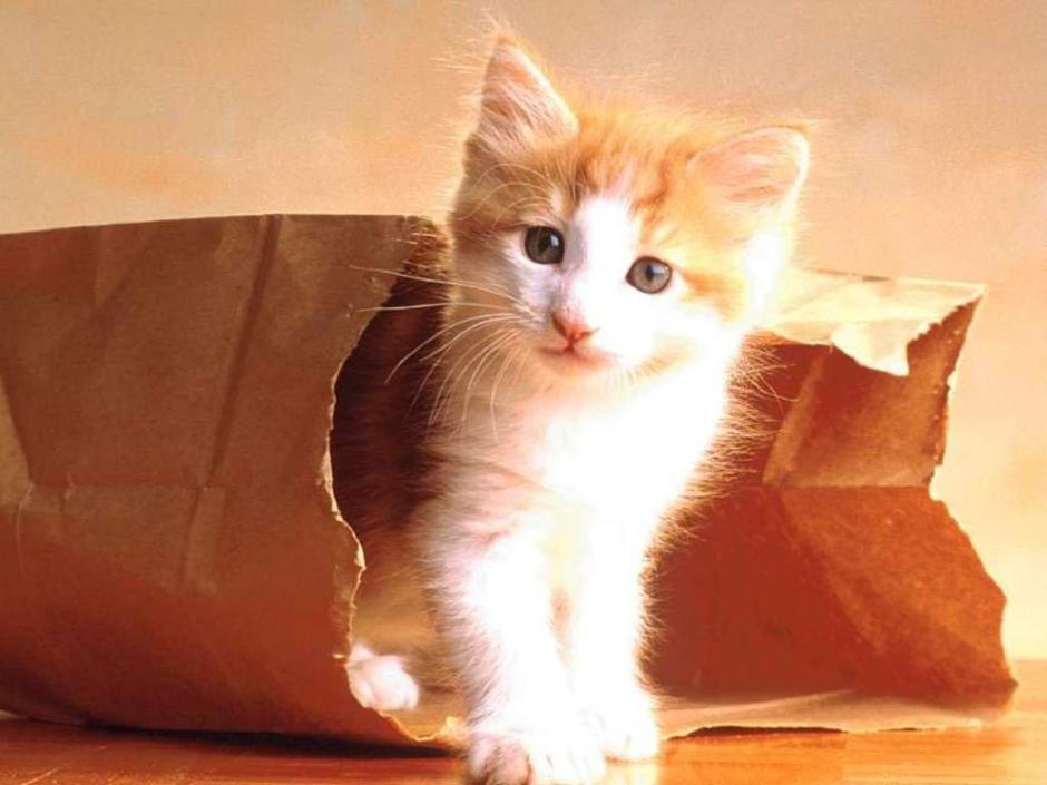 Megvan az idióma a catről meg a bagről? (kép: chiasuanchong.wp.com)