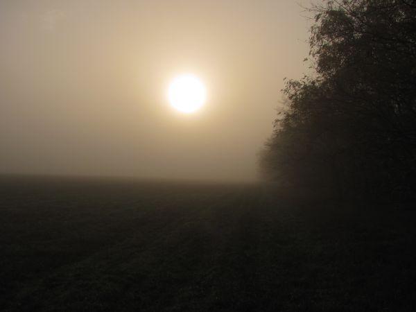 Napfelkelte a tisztáson, ami valaha sóskaföld lehetett