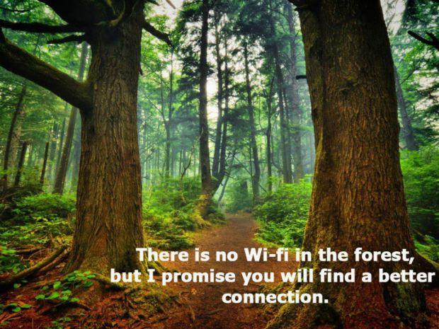 Nincs wifi az erdőben, de ígérem, találsz jobb kapcsolatot. - kép: .trailsroc.org