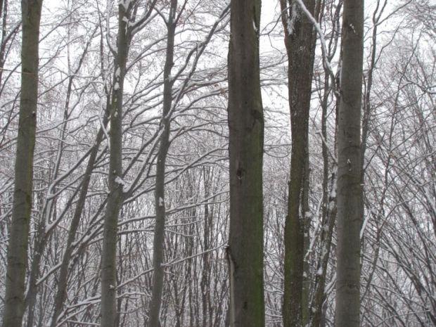 Hó mindenütt, hóvakság