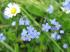 Áprilisban úgy megörültem a tavasznak, hogy minden virágot lefotóztam