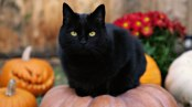 Cute-Black-Cat-Desktop-Background