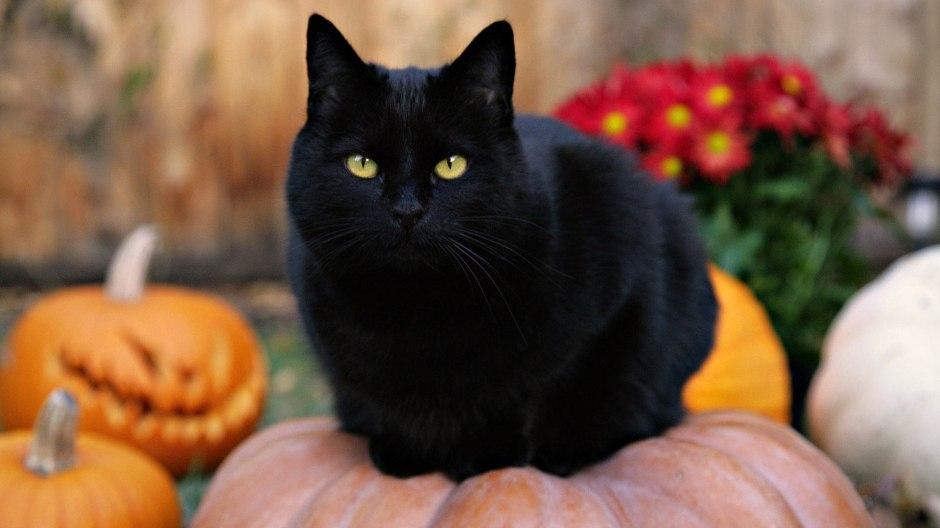 Cute-Black-Cat-Desktop-Background