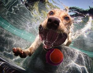 Jövök! - kép: underwaterdogs