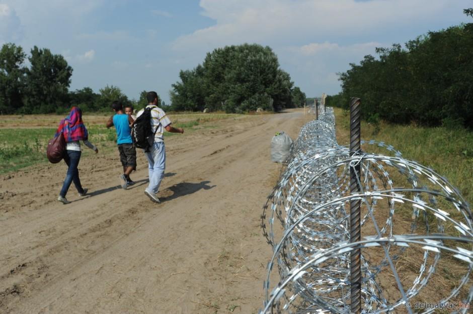 A védett földikutya  viszont veszélyben a kerítés miatt - Kép: Karnok Csaba – delmagyar.hu