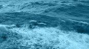ocean_bgimg